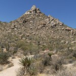 Pinnacle Peak Park Showcases Southwest Wildlife